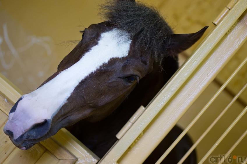 Фото №104334. Лошадка по имени ТАЛЬКА. Конюшня  на конном дворе. Свияжск, июль 2012