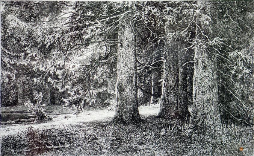 Фото №114554. Ели в Шуваловском парке. 1886. Шишкин И.И.(1832-1898)