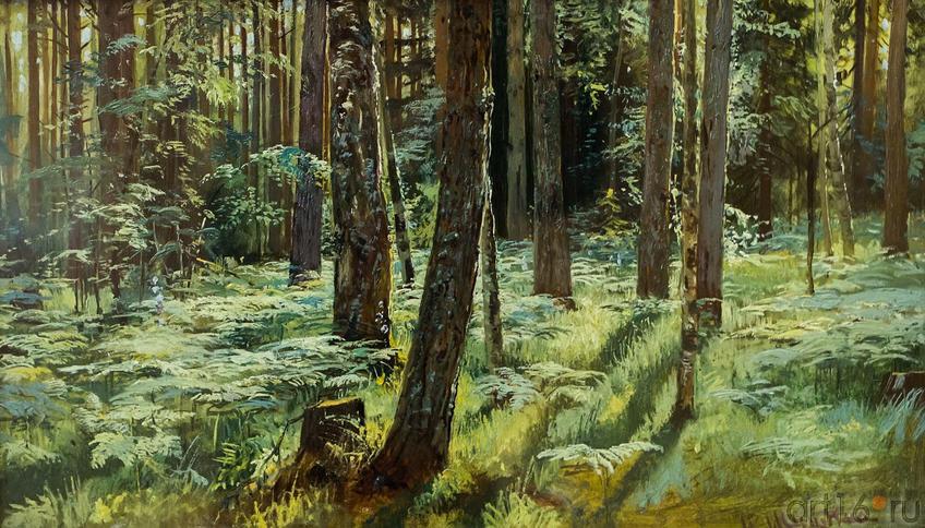 Фото №114770. Папоротники в лесу. Этюд. 1883.Шишкин И.И. (1832-1898)