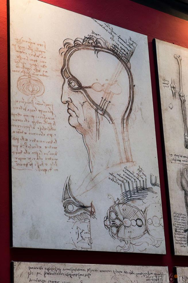 Фото №115204. Анатомический рисунок да Винчи