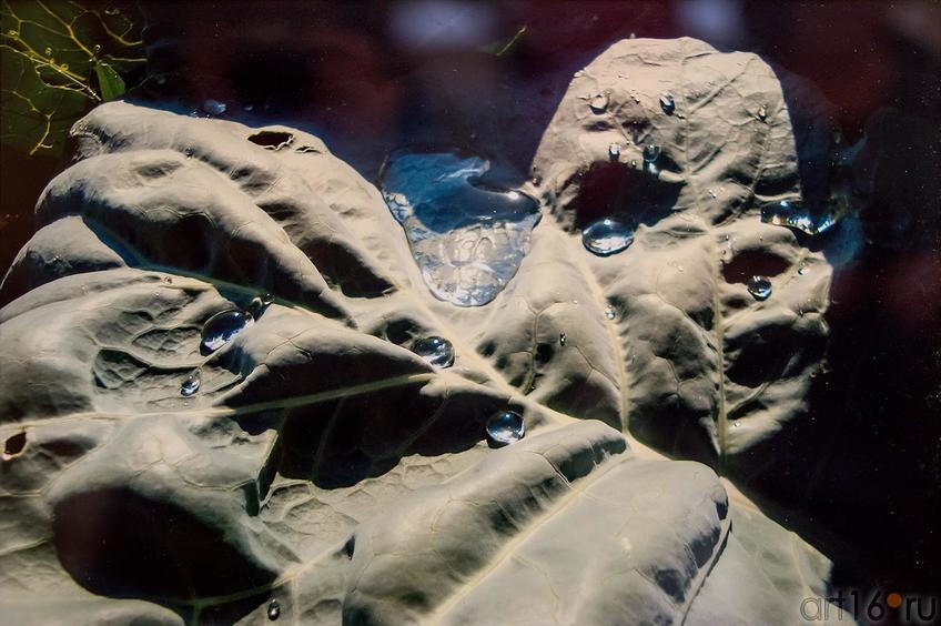 Рождение в капусте. А.Сапйфутдинов::Выставка ТО Дастан