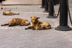 Сальса, Танго на улицах Казани