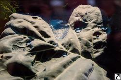 Выставка ТО Дастан