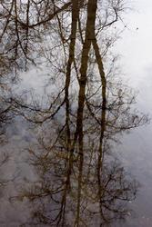 Апрель. Отражение в луже