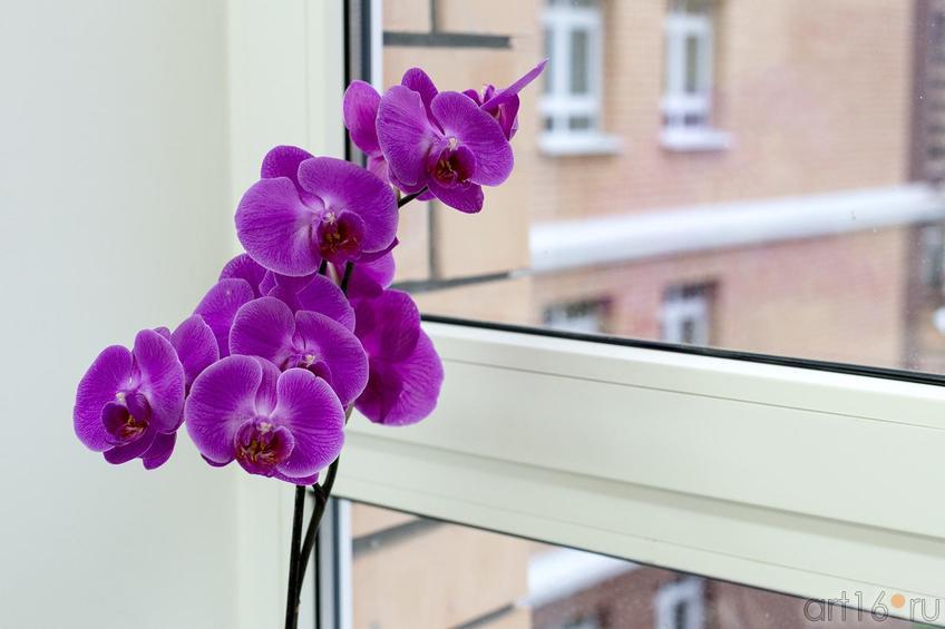 Фото №177156. Art16.ru Photo archive