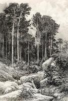 КРЫМСКИЙ ВИД (АЙ-ПЕТРИ). Оттиск 1885 года.