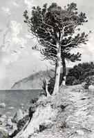 ШИШКИН ИВАН ИВАНОВИЧ. 1832- 1898 АЮДАГ. 1892