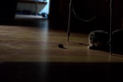 Кот и мышь. Охота