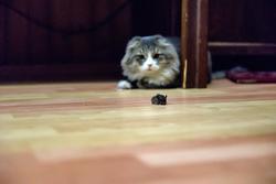 Кот и мышка. Охота