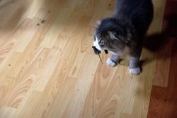 Кот и мышь. Гектор