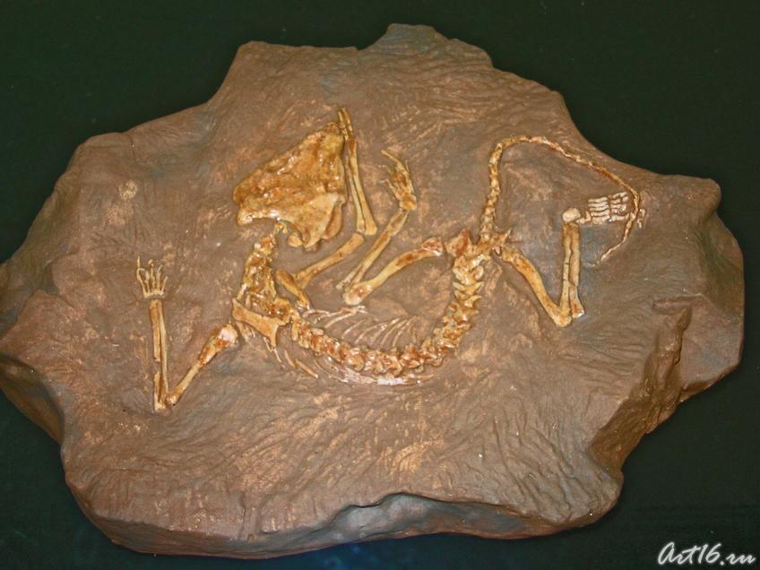 Фото №18301. Скелет рипеозавра эмеролетера