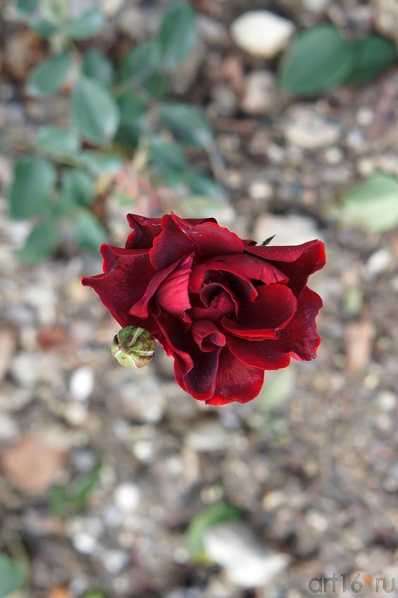 Цветы. Никитский ботанический сад::Никитский ботанический сад