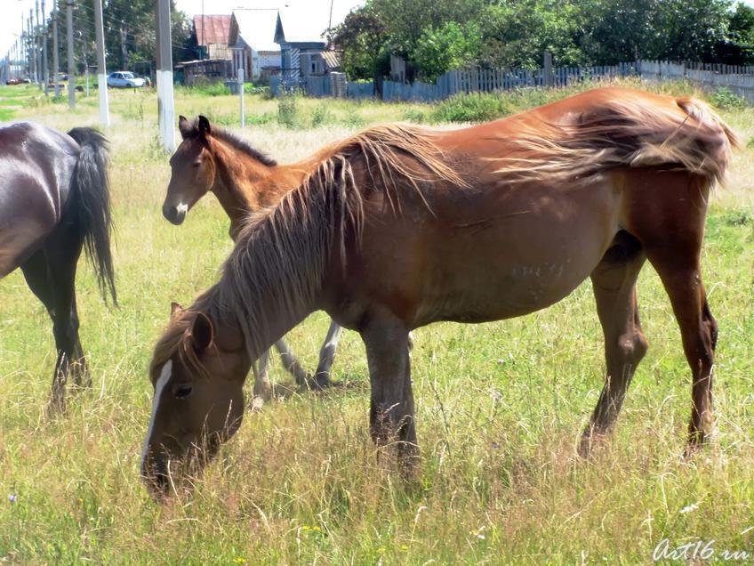 Фото №32376. Табун лошадей на прогулке