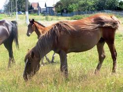 Табун лошадей на прогулке