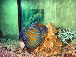 В аквариуме