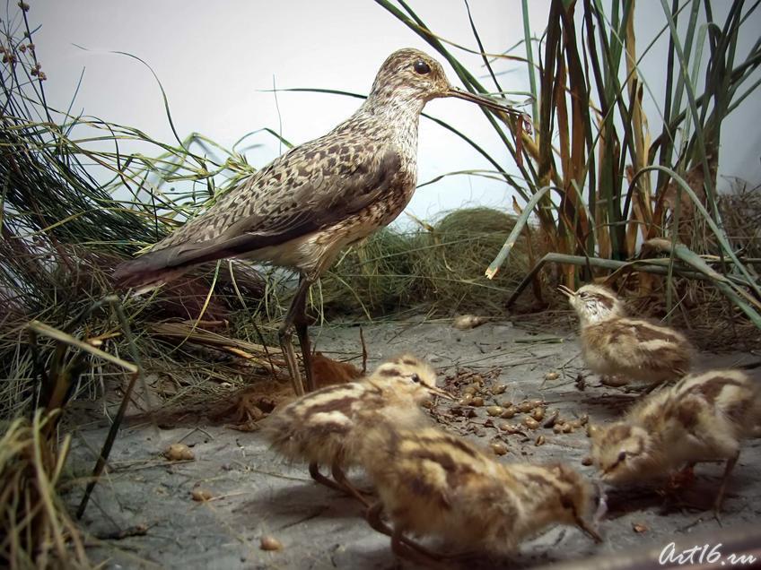 Фото №42464. Поручейник с птенцами — Перелетная птица