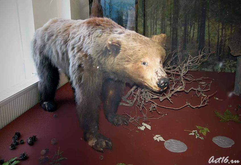 Фото №42469. Бурый медведь