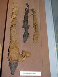 Мумии крокодилов