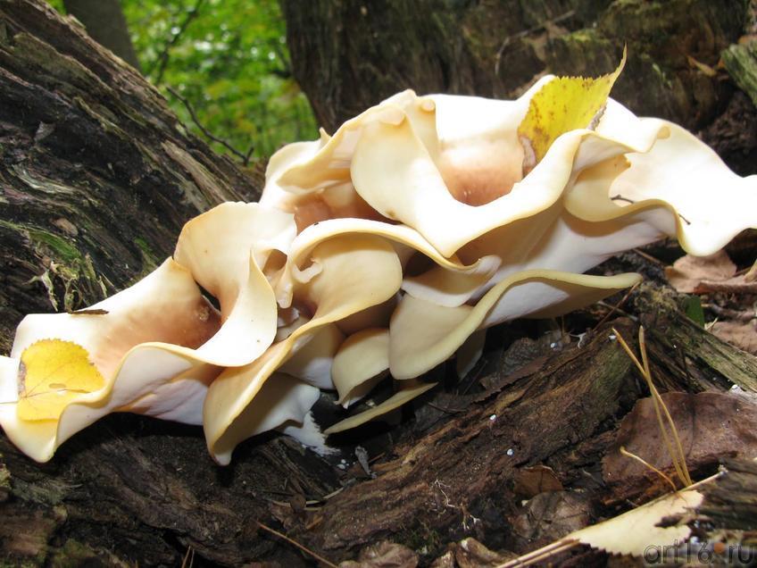 Грибы сентябрьского леса::Избратое