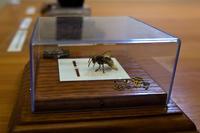 Часы  для осы. А.Коненко