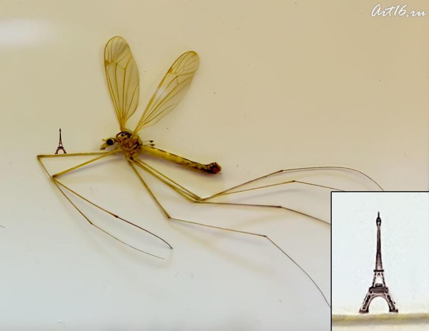 Эйфелева башня на усике комара. А.Коненко