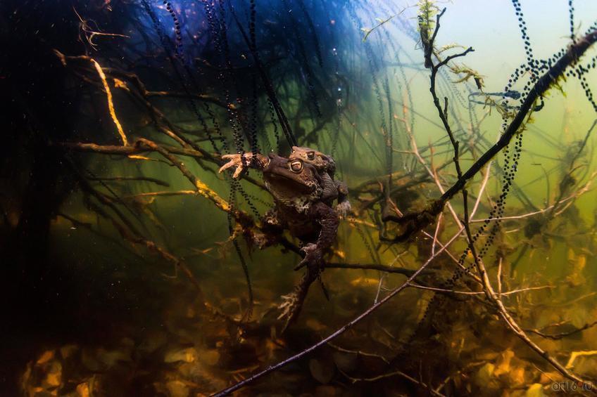 Фото №798587. Среди нитей жемчуга. Эдуард Николаев (Зеленодольск), победитель в номинации «Подводная съемка»