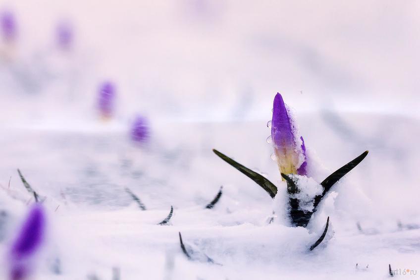 Фото №798642. Метель. Снегопады. Станислав Шинкаренко (Волгоград), победитель в ном. «Растения»