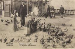 Типы России. Кормление голубей. Москва, 1903