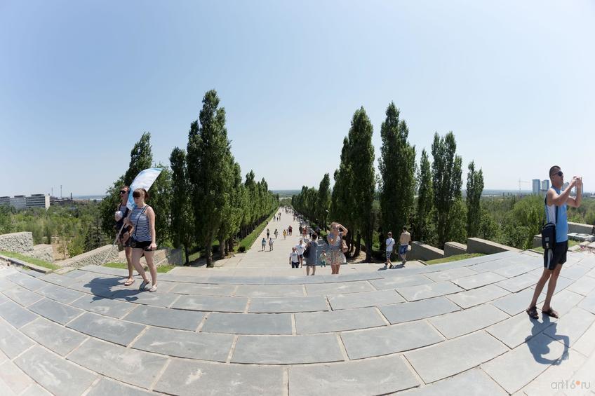 Вид с площади «Стоявших насмерть» на аллею пирамидальных тополей::Волгогорад. 2015