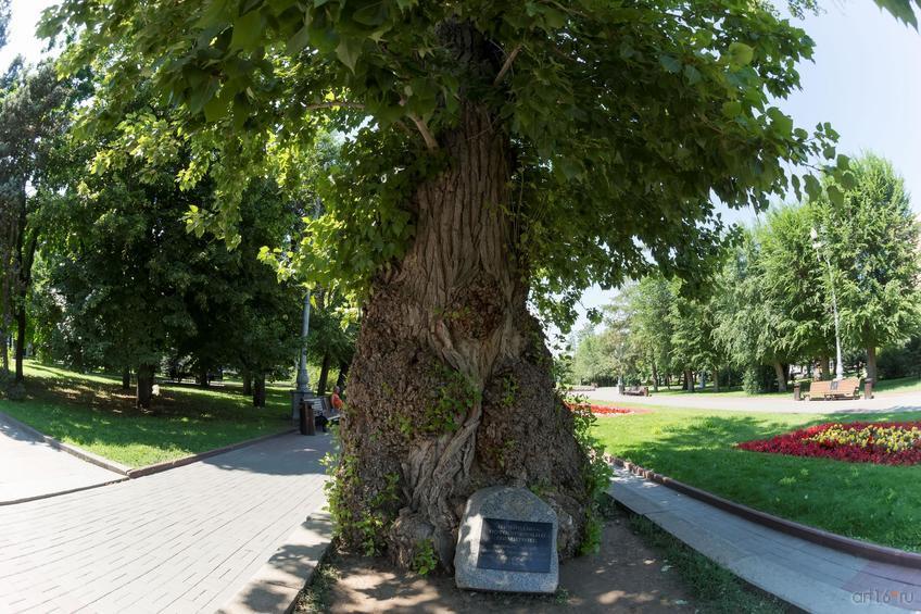 Фото №858871. То́поль на пло́щади Па́вших Борцо́в — исторический и природный памятник Волгограда