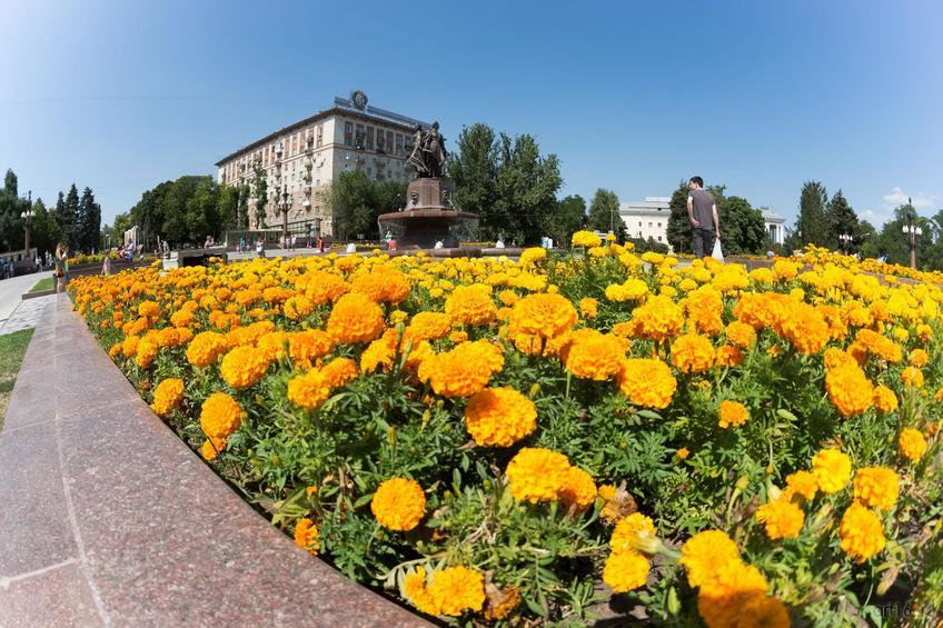 Цветник перед фонтаном ʺИскусствʺ, Волгоград::Волгогорад. 2015