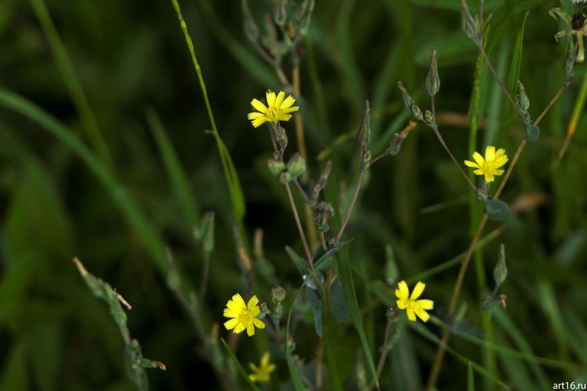 Полевые цветы::Зарисовки. Природа