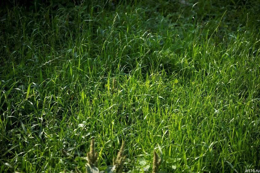 Трава::Зарисовки. Природа
