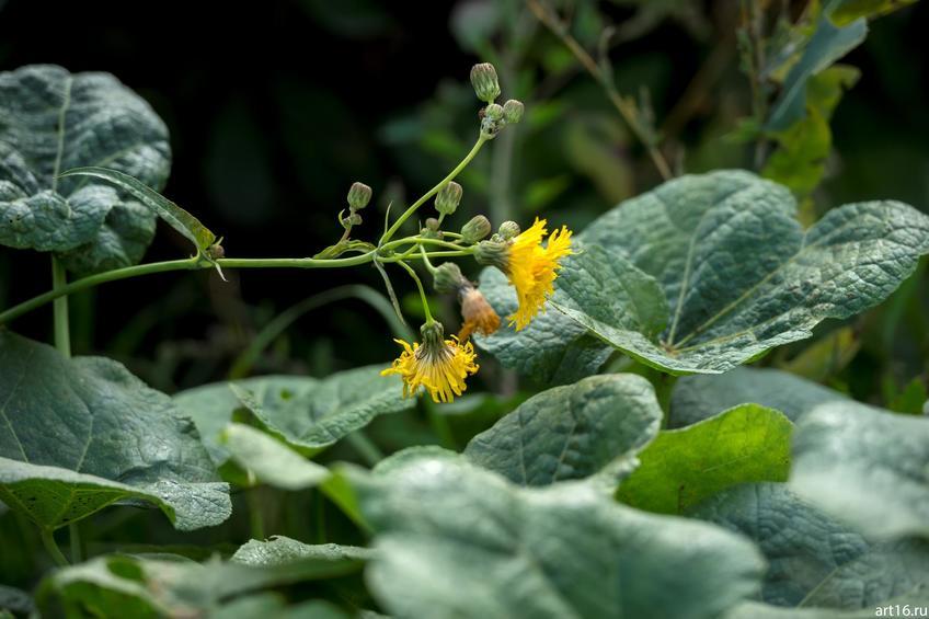 Фото №897598. Полевые цветы