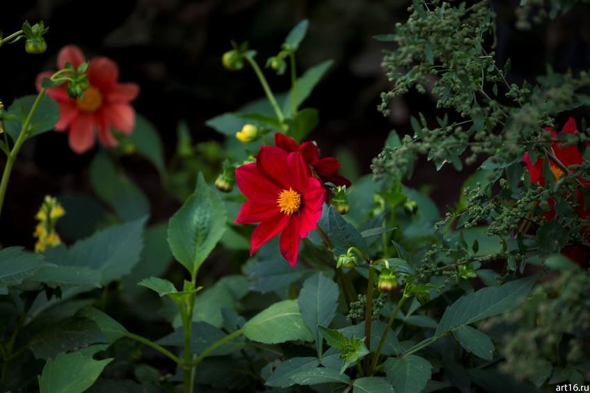 Фото №897614. Садовые цветы