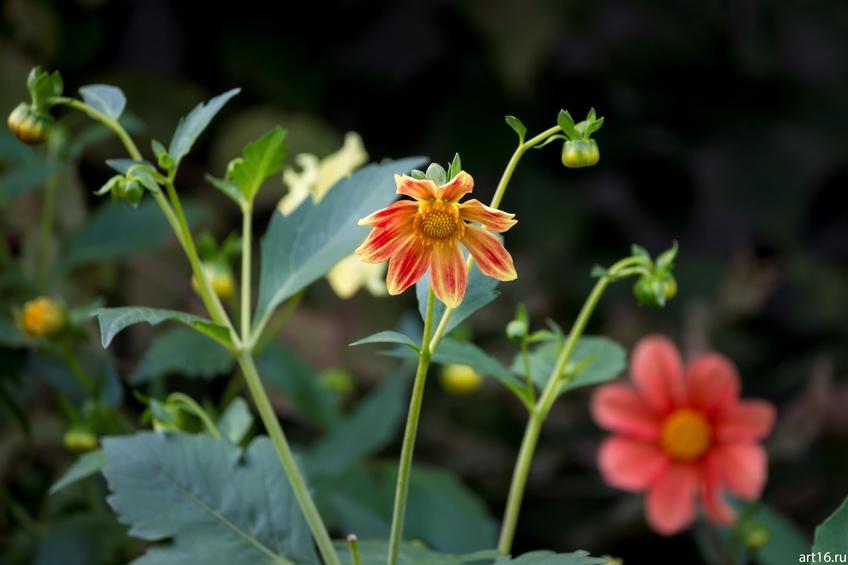 Фото №897618. Садовые цветы