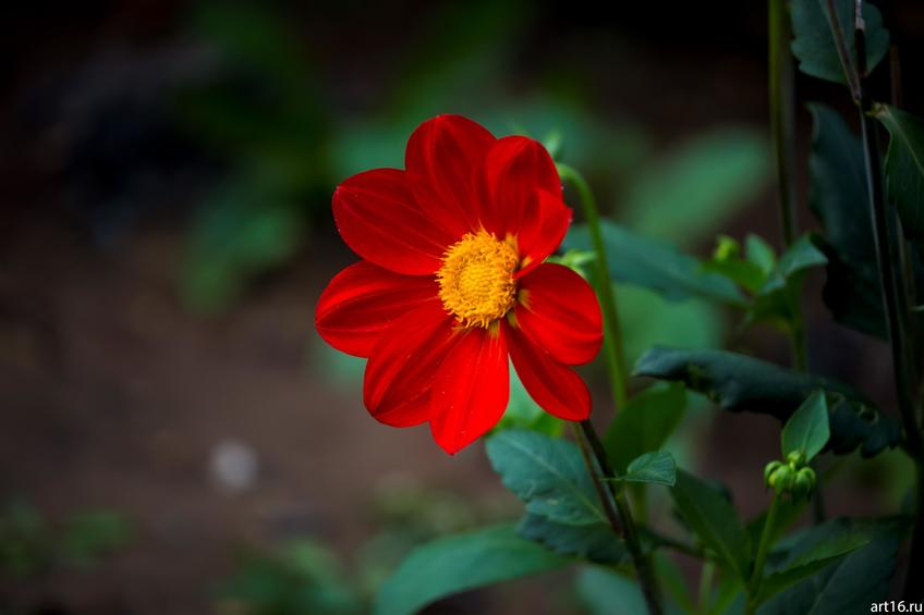 Фото №897622. Садовые цветы