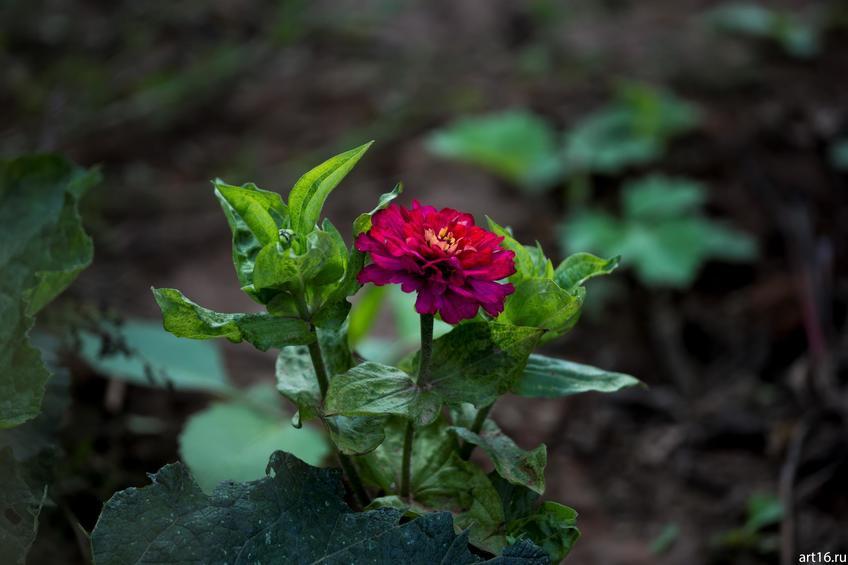 Фото №897626. Садовые цветы