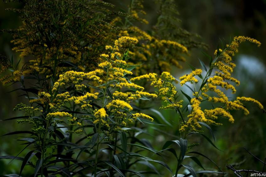 Фото №897630. Садовые цветы
