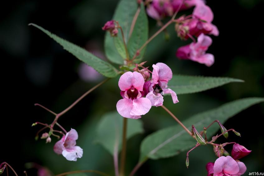 Фото №897634. Садовые цветы