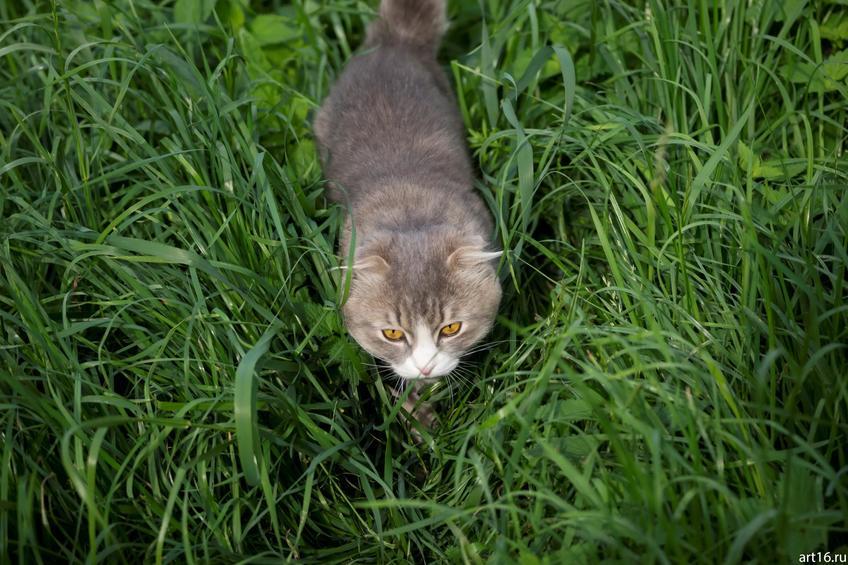 Кот в траве::Зарисовки. Природа