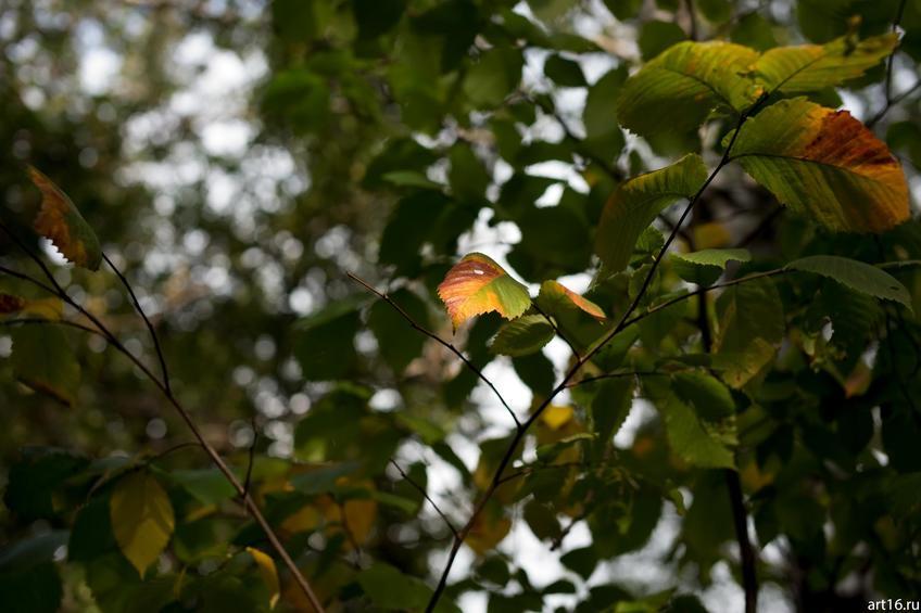 Фото №897662. Осень