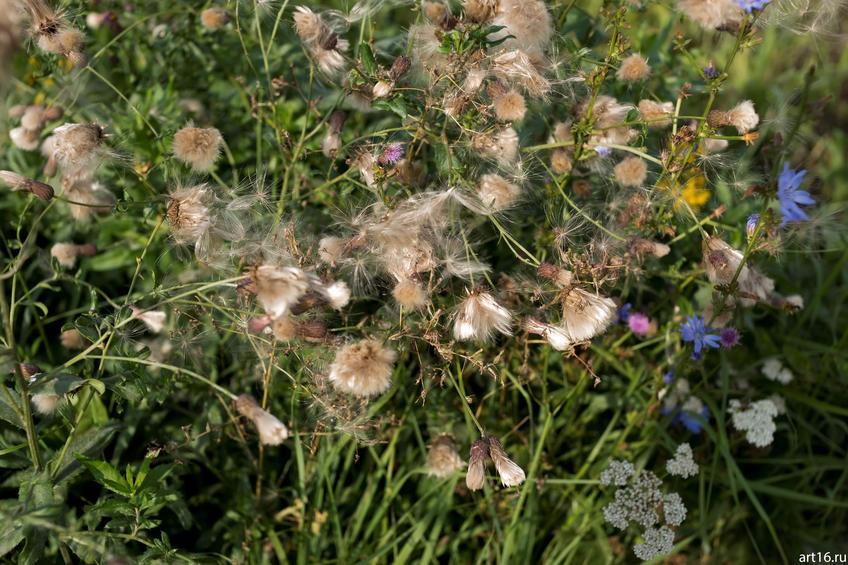 Фото №897674. Синяя садовая ромашка осенью