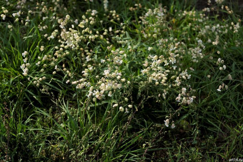 Фото №897682. Цветы луговые