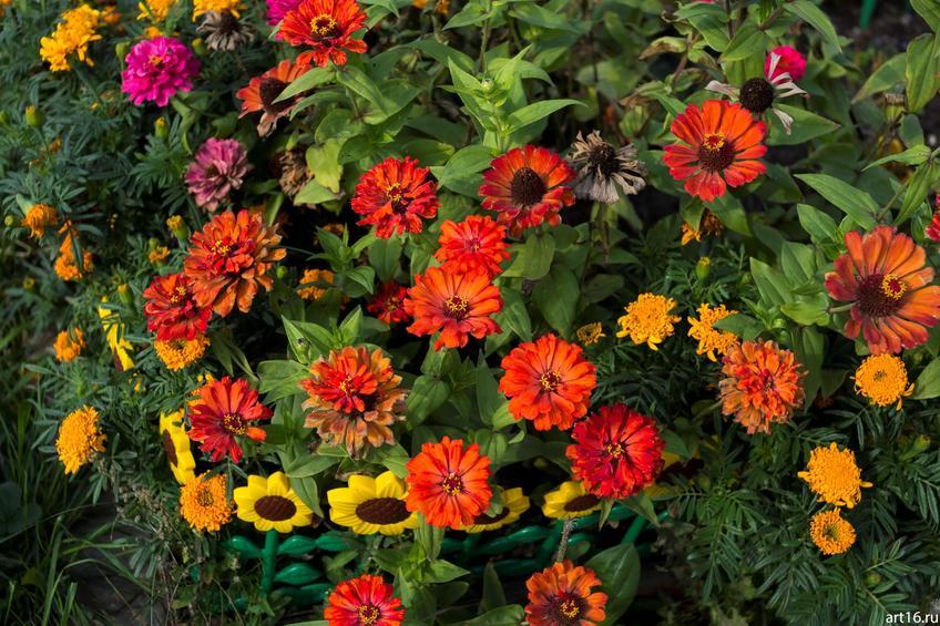 Садовые цветы::Зарисовки. Природа