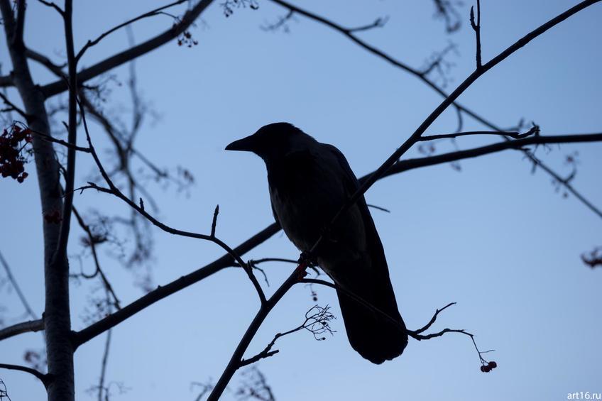 Ворона на ветке::Зарисовки. Природа