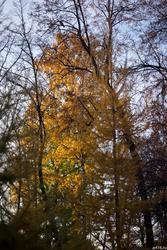 Осень в саду Эрмитаж