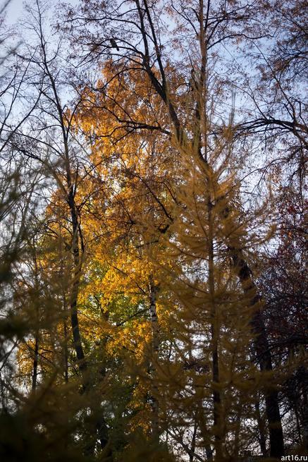 Осень в саду Эрмитаж::Зарисовки. Природа