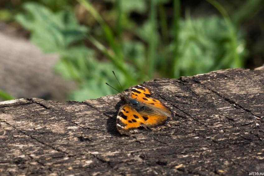 Бабочка::Зарисовки. Природа