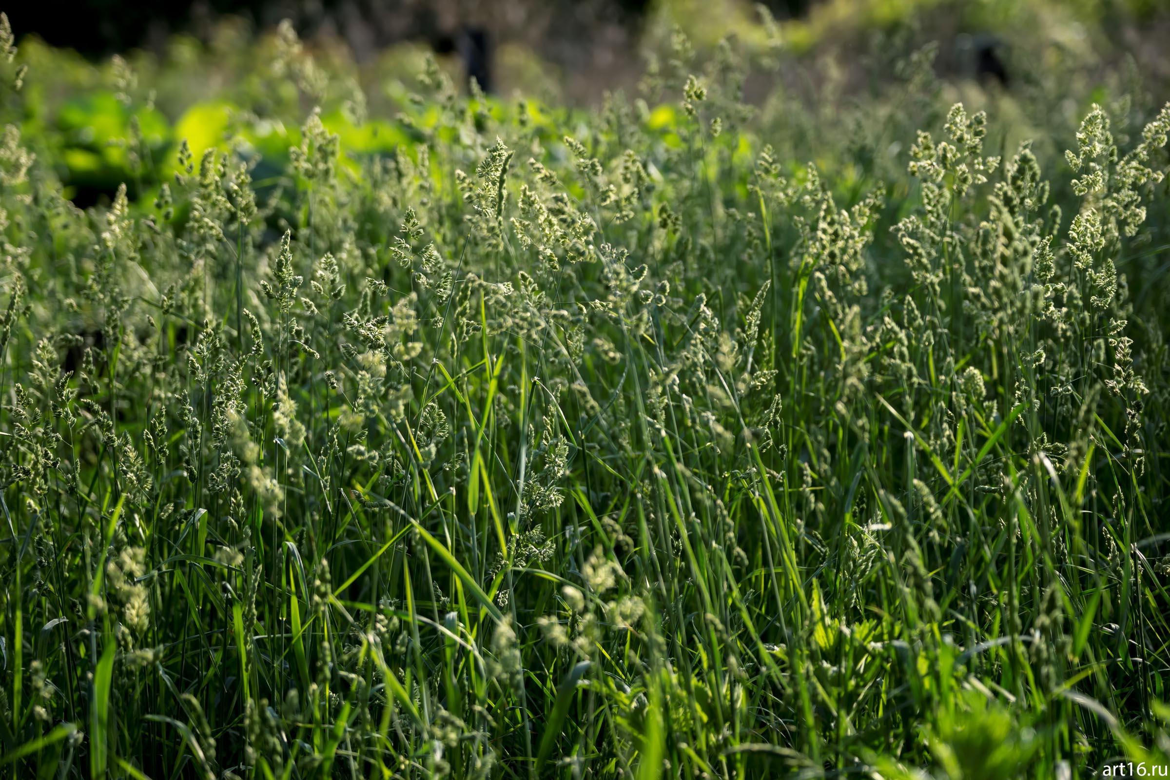 Луговая трава::Зарисовки. Природа
